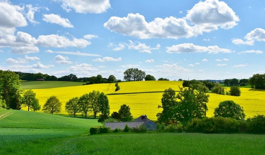 Paesaggio, Natura, Colza, Campo, Agricoltura, Rurale