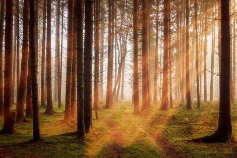 フォレスト, 木, 日光, 秋, 風景, 自然, ログイン, Morgenstimmung, ヘイズ, 気分
