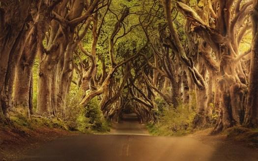 Alberi, Strada, Irlanda Del Nord, Paesaggio, Rami