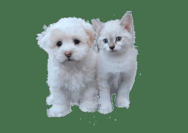 Cane E Gatto Facoltativo, Pet, Cat