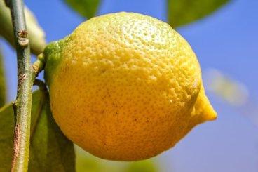 Lemon, Citrus, Fruit, Citrus Fruits