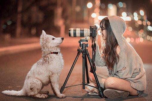Puppy, Dog, Pet, Night, Schäfer Dog