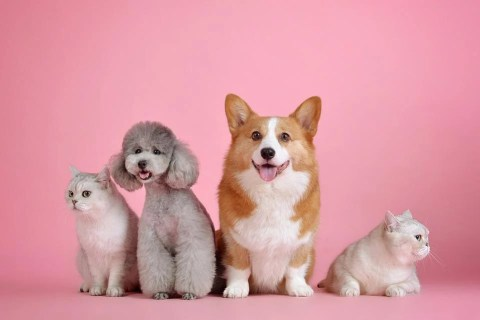 Mascotas, Lindo, Gato, Perro, Lindo Fondo De Pantalla