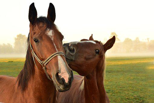 10 000 Free Horse Images Pictures In Hd Pixabay