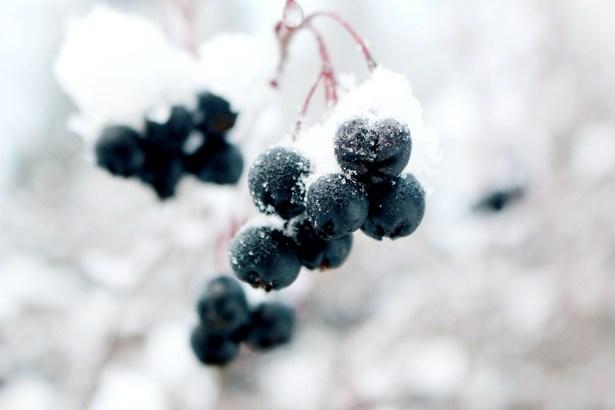 Đông Lạnh Nho Mùa - Ảnh miễn phí trên Pixabay