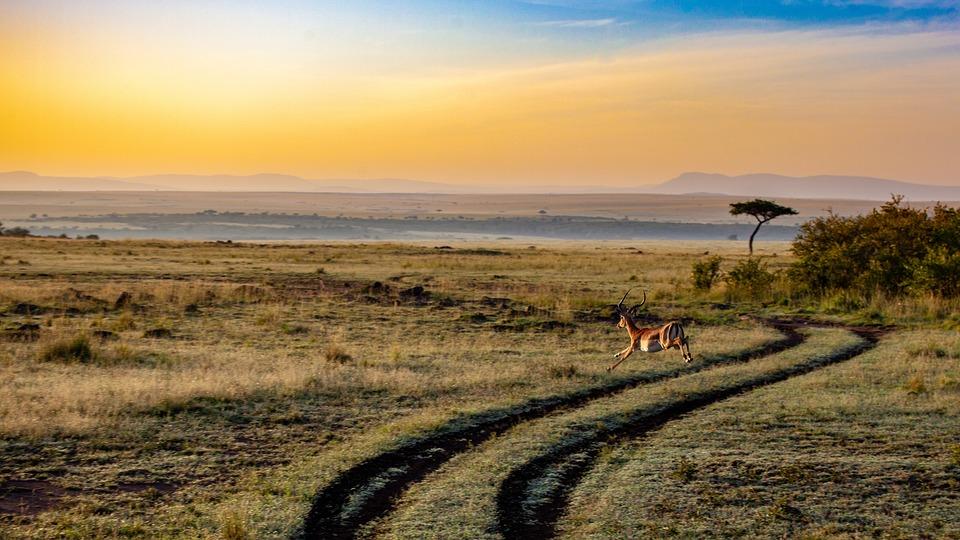 アンテロープ, 日没, ケニア, 夕暮れ, 哺乳動物, アフリカ, 風景, サファリ, 自然, 気分, 空