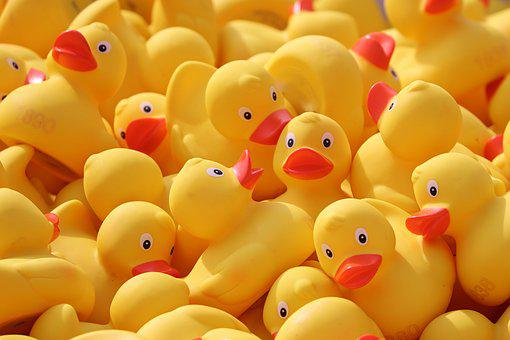 200 Free Rubber Ducks Duck Images Pixabay