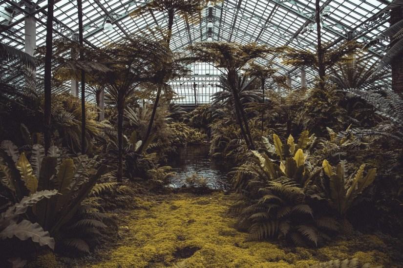 Conservatoire, Plantes, Vert, À Effet De Serre, Arbres