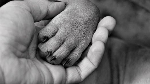 Hand, Frau, Pfote, Hund, Finger, Krallen, Schwarz Weiß