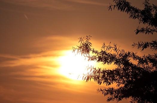 Sera Sole, Tramonto, Baumsilhouette, Cielo, Romantica