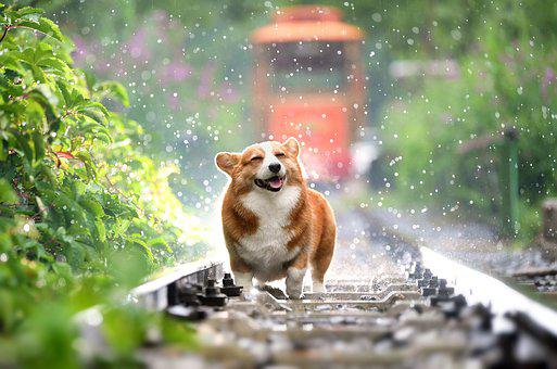 30 000 Free Cute Dog Images Pictures In Hd Pixabay