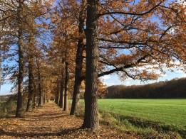 Bos, Nederland, Utrechtse Heuvelrug, Herfst, Bomen