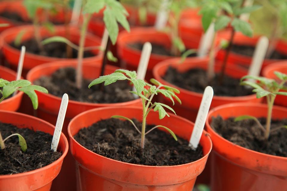 Planta De Semillero, Jardinería, Efecto Invernadero