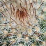 Cactus Cacti Plant Free Photo On Pixabay