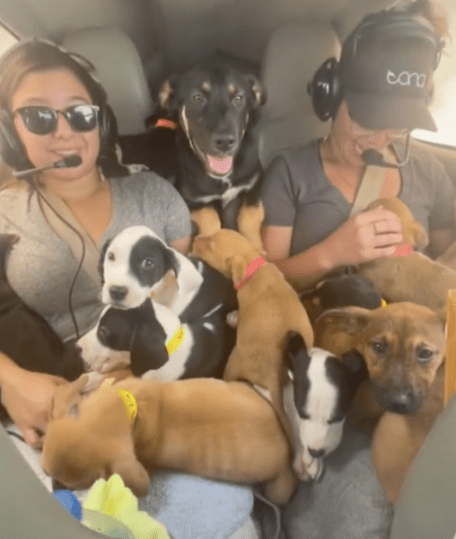 Screen Shot 2021 10 12 at 4.16.25 PM 508x600 - A Plane Full Of Puppies, 27 of them! It's Only the Best Video Ever.