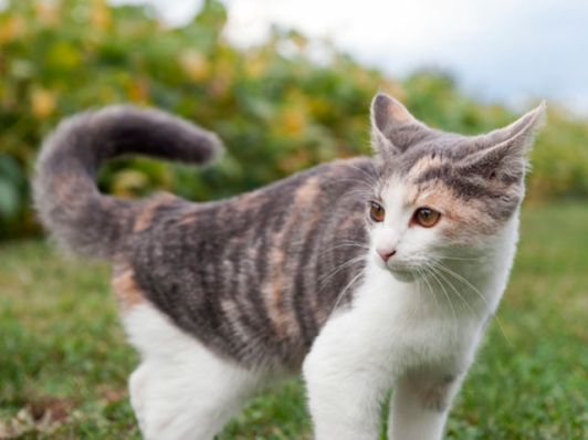 Resultado de imagen para gato moviendo la cola