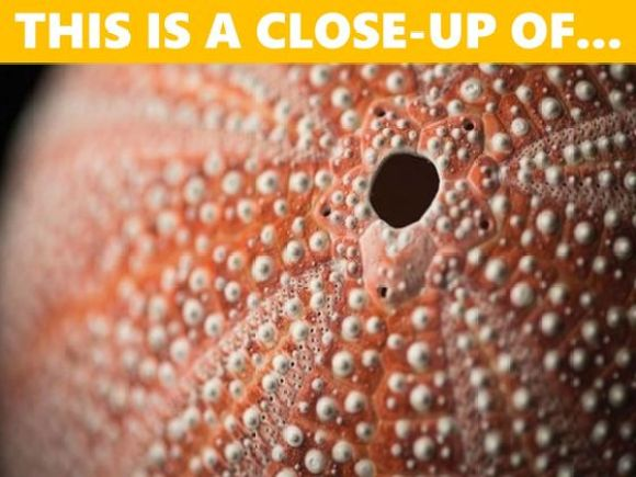 Only 1 in 50 People Can Identify These Close-Up Images