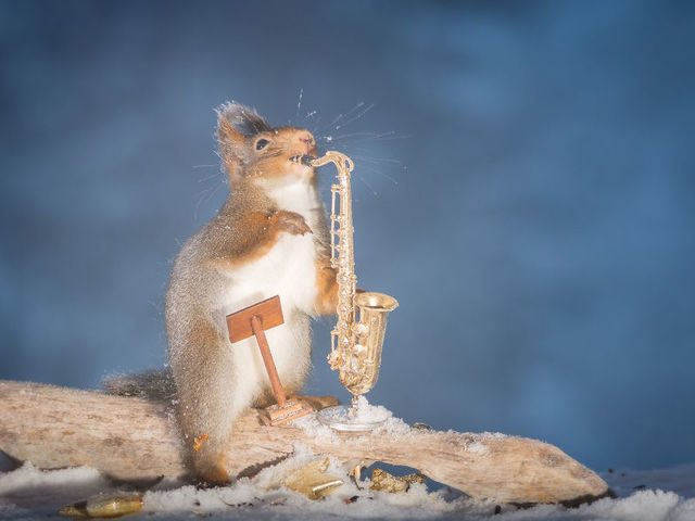 There's even a squirrel Miles Davis! Squirrels Davis!