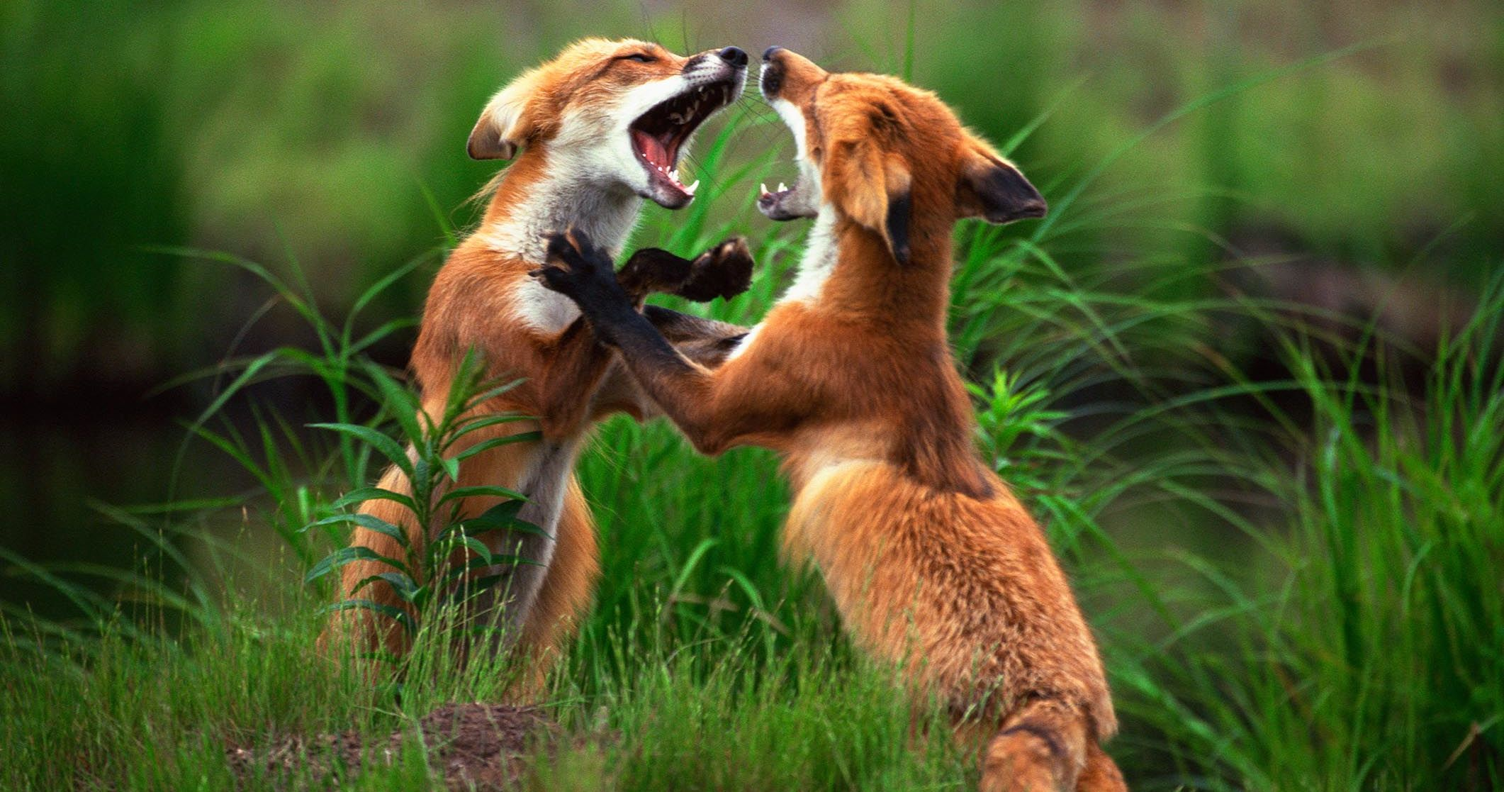 Can You Conquer Our Animal Fight Club True Or False Quiz
