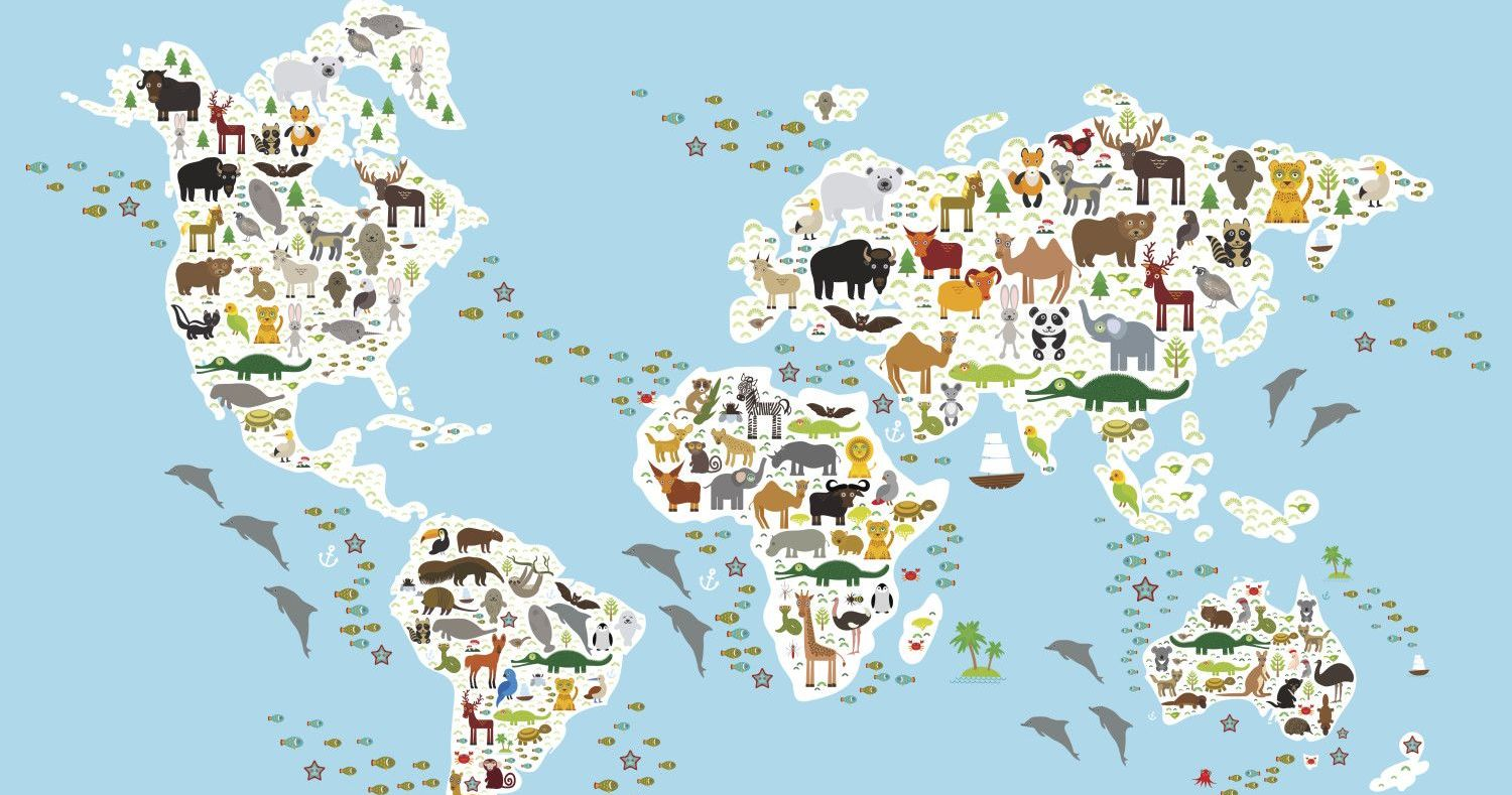 Which Continent Are These Wild Animals From