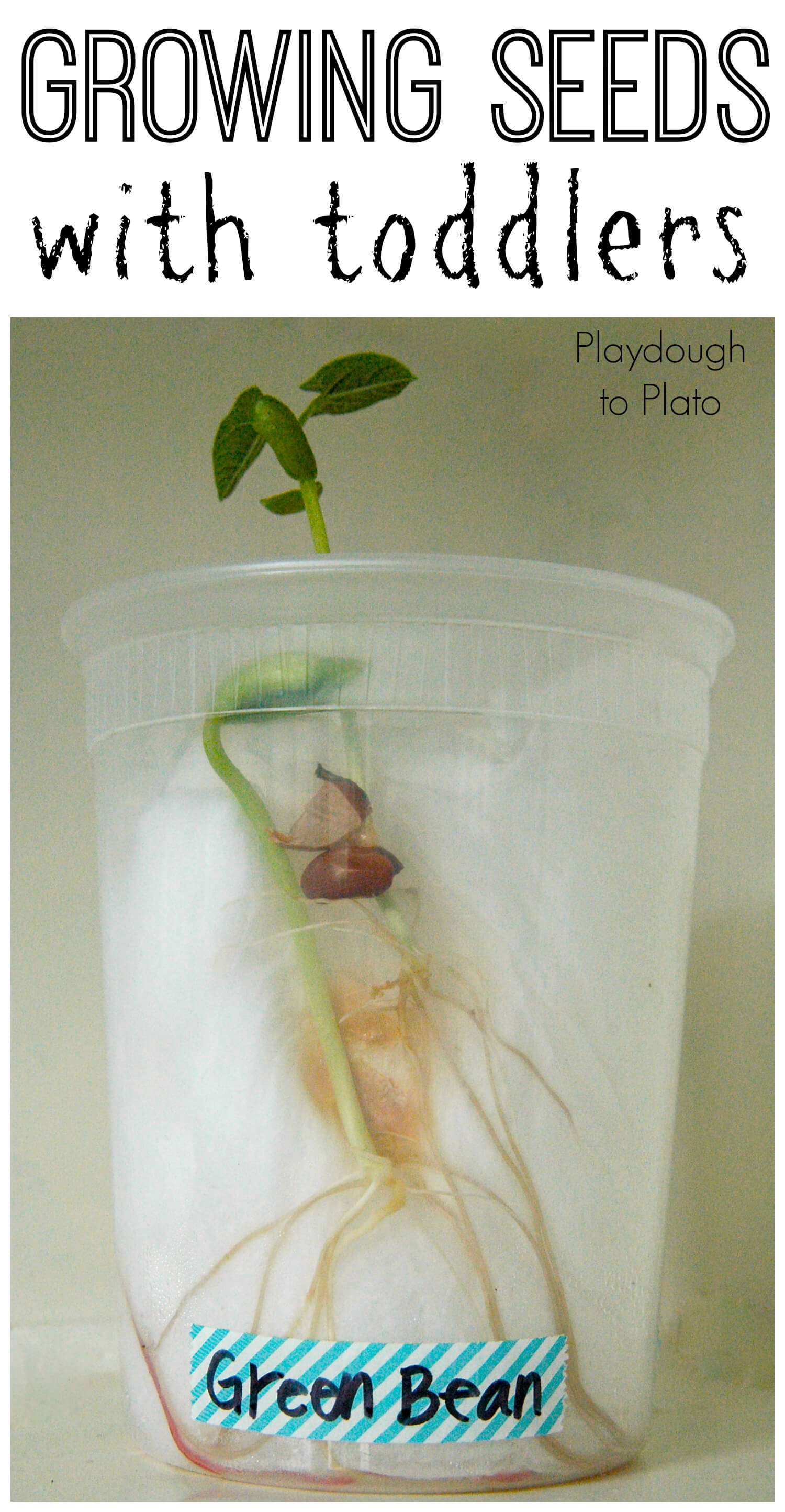 Growing Seeds With Toddlers