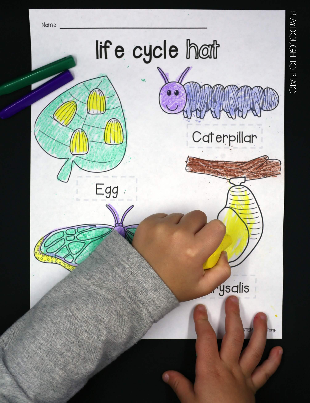 Erfly Stages Worksheet For Kindergarten Erfly Best Free