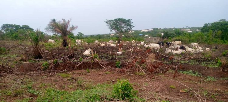 Family petitions Sanwo-Olu, IGP over invasion of farmland in Epe by herdsmen