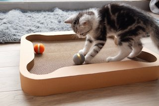 Incredible high-tech gadgets for your pets and yourself photo 16