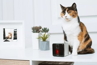 Incredible high-tech gadgets for your pets and yourself image 6