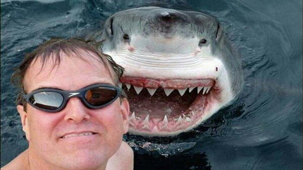 Sharks vs. Selfies @ Pocketlint