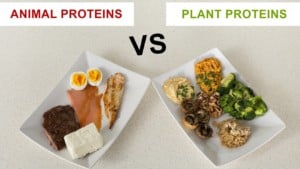 High Protein Vegetables