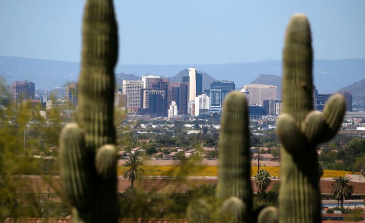 Past and Future: Ancient Cacti near Phoenix, Arizona