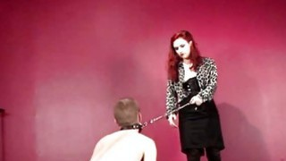 BDSM male sex slave used as a puppy dog Preview Image
