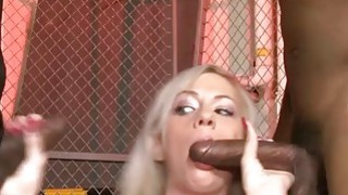 Round boobs blondie babe all_holes banged_by big black cocks Preview Image