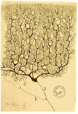 Ramón y Cajal/Public Domain
