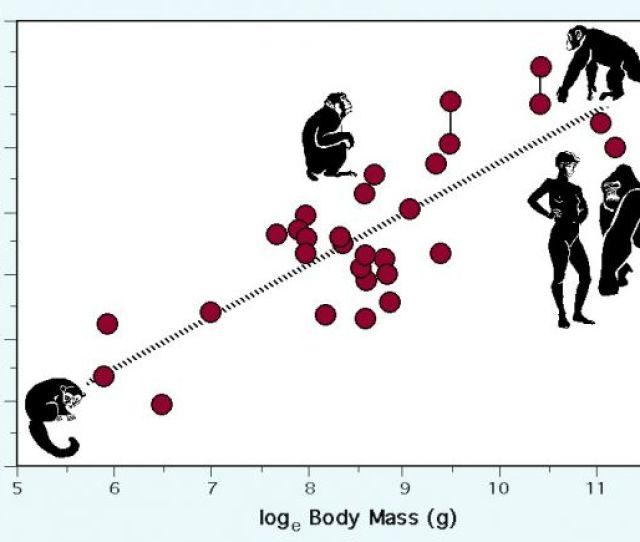 Plot By Robert D Martin Of Data From Dixson 2012