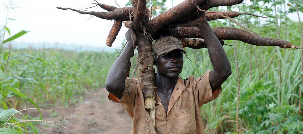 Image result for sad cassava farmer