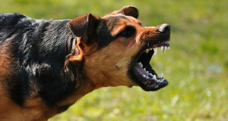 When-dogs-attack