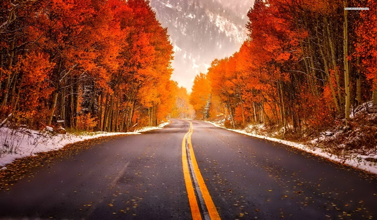 Prepara tu coche para el otoño
