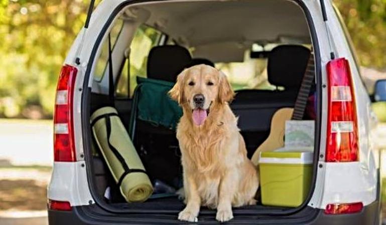 Recomendaciones para transportar tu mascota de forma segura