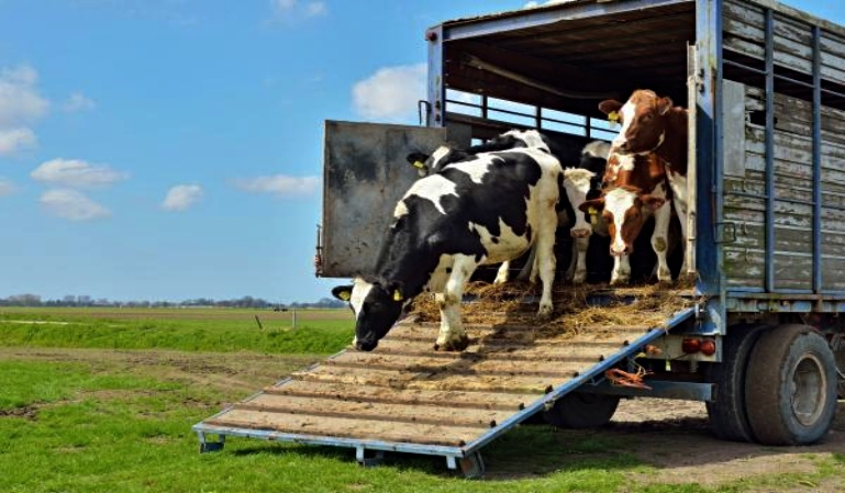 Transporte de animales vivos. Requisitos esenciales