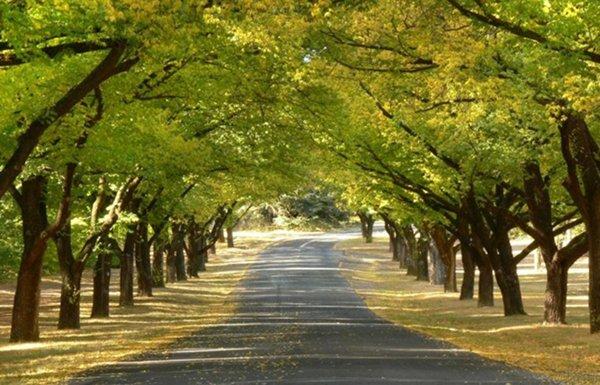 El método del árbol para reducir multas y velocidad en las carreteras