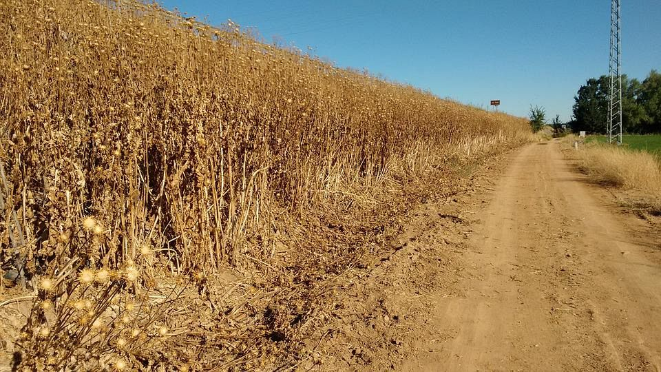 Risultati immagini per limitare caccia a causa siccità e incendi