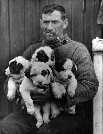 Thomas Crean, avec les chiots nés à bord de l'Endurance.