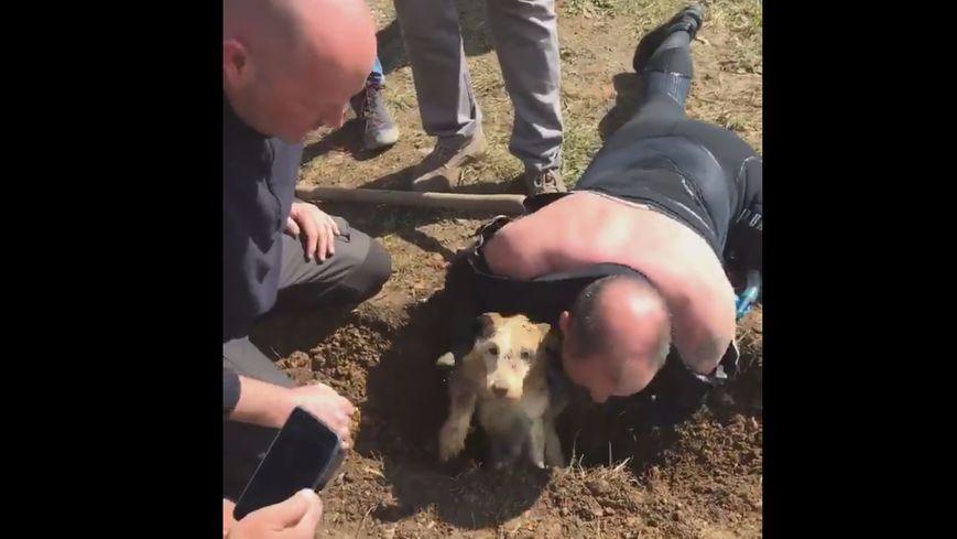 Billy vient d'être sauvé, ce mardi 9 avril, après six jours coincé dans un trou.