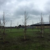 Forest school trees taking shape
