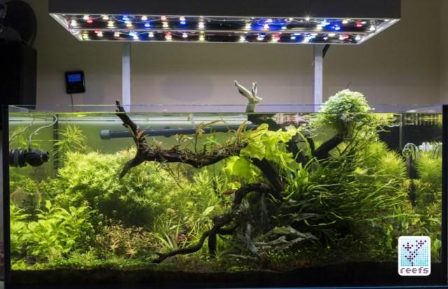 Author's planted aquarium