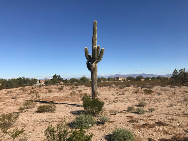 Big Saguaro on your lot with views of the Superstitions and San Tans. EZ access to San Tan Regional Park from here too.