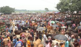 Huge crowd in Pabna cattle market, health guidelines ignored