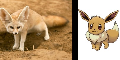 Image result for Real Eevee